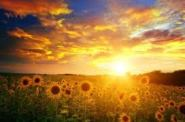 sun.field